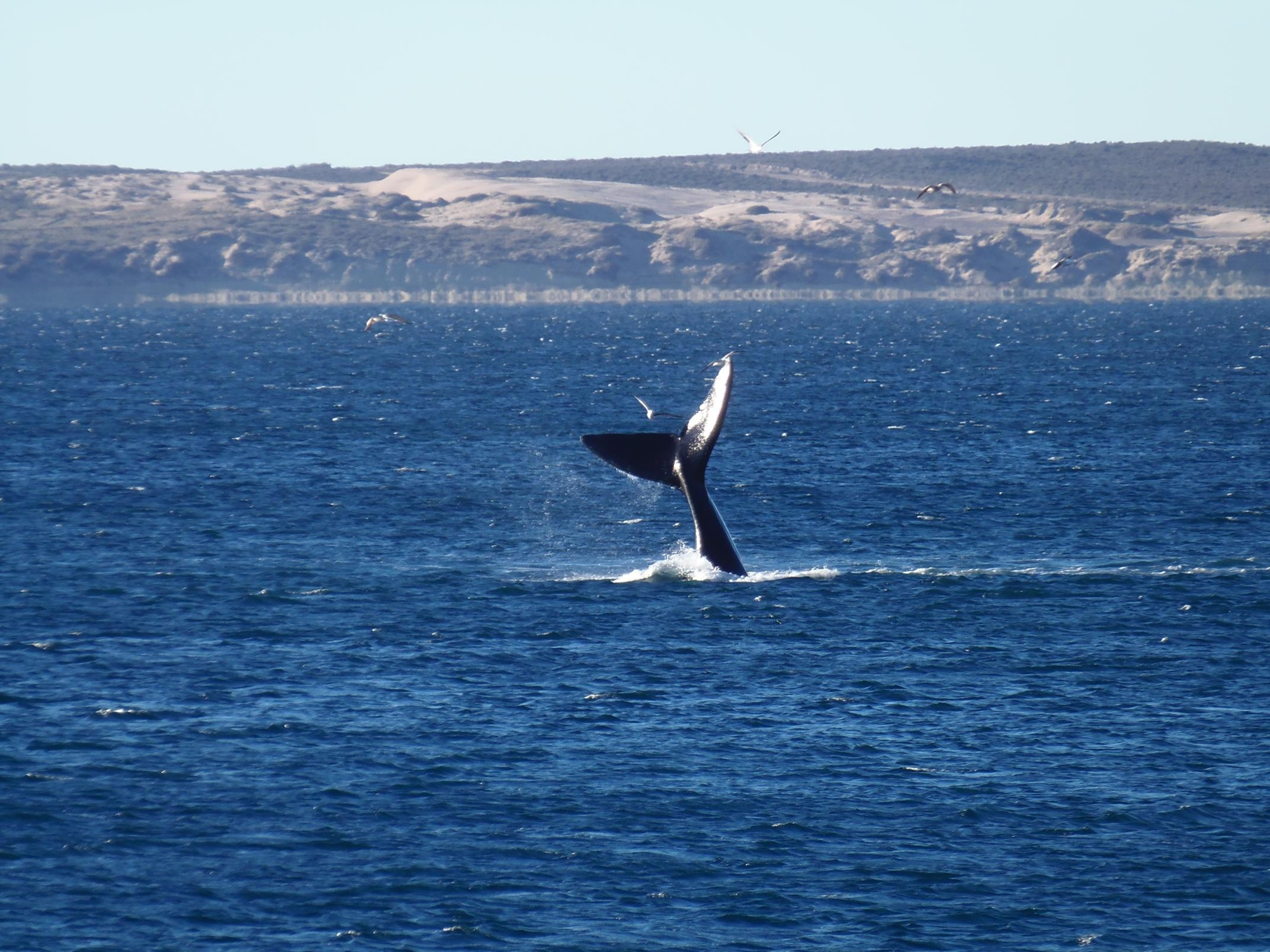 See the Whales and Penguins in Puerto Madryn, Argentina